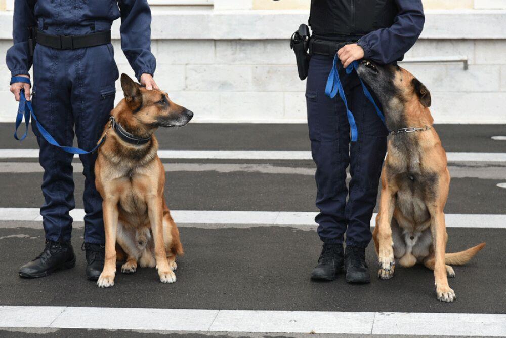 Spécialisations dans la Police nationale